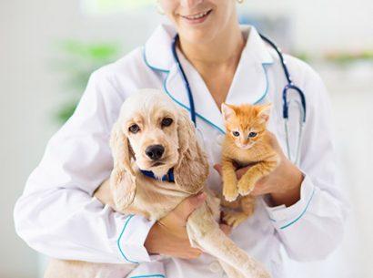 Enalees-tests vétérinaires canines et félins
