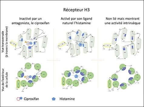 SABNP - Récepteur H3 de l'Histamine
