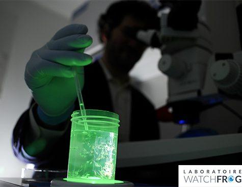 Dans le laboratoire Watchfrog - bioluminescence tétard