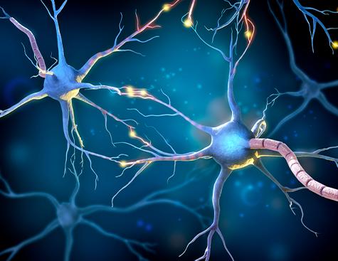 Représentation de neurones - cellules affectées par la CMT