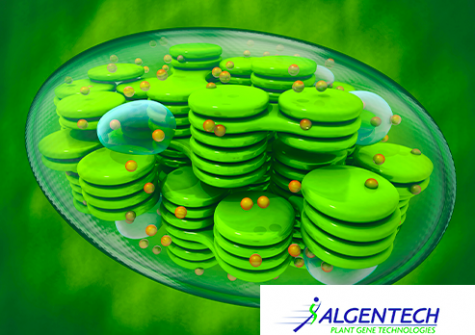 Chloroplaste - Production d'ingrédients biosourcés - Algentech