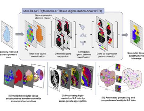 SYSFATE - MultiLayer - Molecular Tissue Digitalization Analyzer