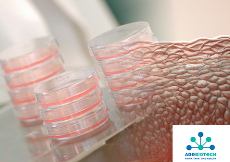 7 oct. - Colloque Adebiotech - 3D reconstructed Tissues